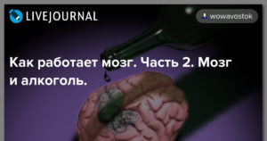Как работает мозг. Часть 2. Мозг и алкоголь