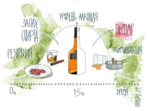 Как убрать перегар от пива быстро и эффективно