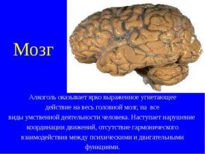 Воздействие алкоголя на мозг: механизм разрушения, последствия, лечение